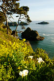 shoreline wildflowers stock photography | California, Mendocino County, Coastal bluffs, Elk, image id 5-630-161