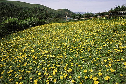 image 5-640-89 California, Mendocino County, Albion River Inn, Flowering lawn