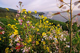 horizontal stock photography | California, Mendocino County, Spring wildflowers near Elk, image id 5-641-8
