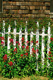garden and wall stock photography | California, Mendocino County, Fence and flowers, image id 5-642-5