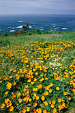 sea stock photography | California, Mendocino County, California poppies, Navarro Bluff, image id 5-642-73