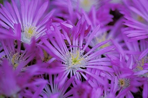 image 5-643-28 California, Mendocino County, Spring flowers