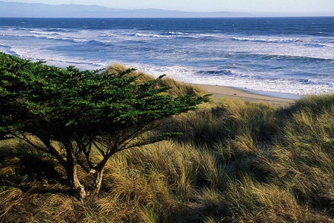 image 5-671-65 California, Santa Cruz County, Pajaro Dunes, Beach and dune grass
