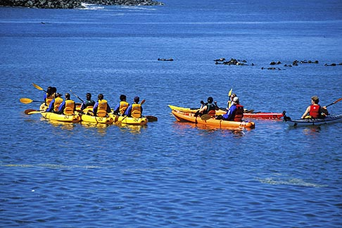 image 5-672-56 California, Moss Landing, Elkhorn Slough, Kayakers and sea otters