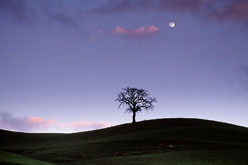 image 5-93-35 California, Tree and full moon at dusk