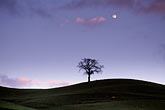 moonlight stock photography | California, Contra Costa, Tree and full moon at dusk, image id 5-93-35
