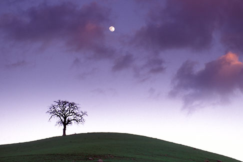 image 5-96-2 California, Contra Costa, Tree and full moon at dusk, Deer Valley Road