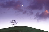 hillside and clouds stock photography | California, Contra Costa, Tree and full moon at dusk, Deer Valley Road, image id 5-96-2