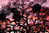 twilight stock photography | California, East Bay Parks, Tree at sunset, Black Diamond Mines , image id 6-271-35
