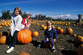 three girls stock photography | California, East Bay Parks, Pumpkin Farm near Ardenwood, image id 6-331-36