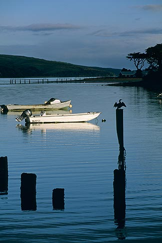 image 6-420-51 California, Tomales Bay, Boats on the Bay at Marshall