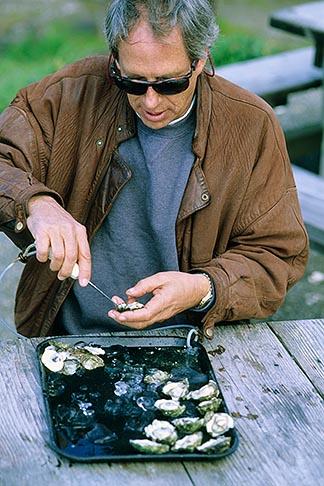 image 6-421-46 California, Marshall, Hog Island Oyster Co, Bill Hemphill shucking oysters