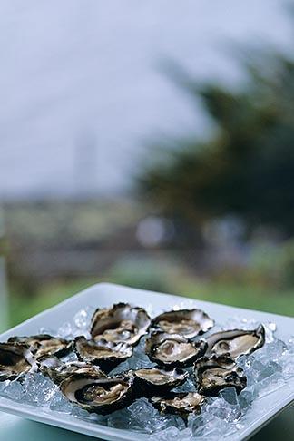 image 6-422-53 California, Marshall, Hog Island Oysters