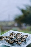 america stock photography | California, Marshall, Hog Island Oysters, image id 6-422-53