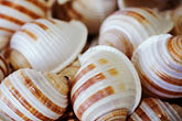 multicolor stock photography | California, Morro Bay, Seashells, image id 6-472-15