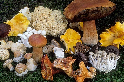 image 6-487-28 California, Mendocino , Assorted wild mushrooms