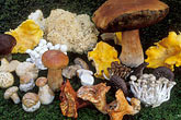 assorted wild mushrooms stock photography | California, Mendocino , Assorted wild mushrooms, image id 6-487-28