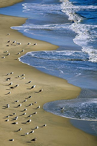 image 7-602-32 California, Santa Cruz, Cowell Beach, Gulls