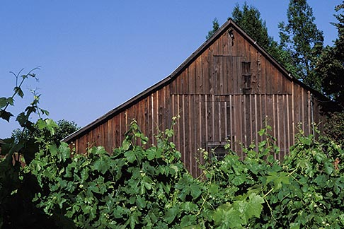 image 8-395-2 California, Sonoma County, Vineyards and Barn, Healdsburg