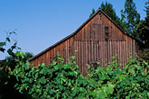 vineyards and barn stock photography | California, Sonoma County, Vineyards and Barn, Healdsburg, image id 8-395-2