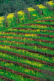 pattern stock photography | California, Napa County, Vineyards, image id 9-157-8