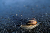 single stock photography | Animals, Snail on pavement, image id 9-595-16