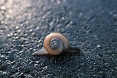 single stock photography | Animals, Snail on pavement, image id 9-595-18