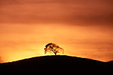 twilight stock photography | California, Contra Costa, Tree on hilltop, image id S2-15-20