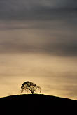 dark stock photography | California, Contra Costa, Tree on hilltop, image id S2-15-3