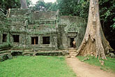 trees stock photography | Cambodia, Angkor Wat, Ta Prohm, image id 0-401-20