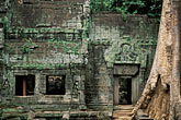 old stock photography | Cambodia, Angkor Wat, Ta Prohm, image id 0-401-21