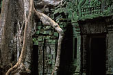 horizontal stock photography | Cambodia, Angkor Wat, Ta Prohm, roots and banyan tree, image id 0-401-27