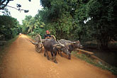 road stock photography | Cambodia, Siem Reap, On the road to Banteay Srei, image id 0-401-86