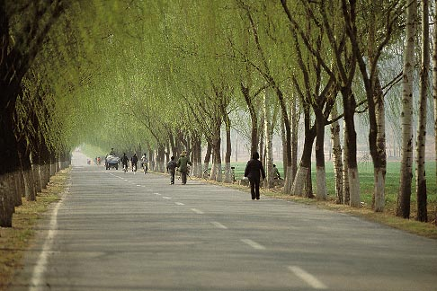 image 4-178-20 China, Beijing, Spring willows north of the city