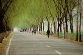 tree lined road stock photography | China, Beijing, Spring willows north of the city, image id 4-178-20