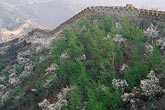 stone wall stock photography | China, Beijing, Flowering trees at the Great Wall at Mutianyu, image id 4-185-76