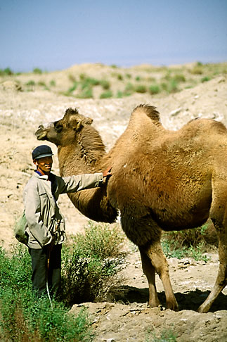 image 4-393-4 China, Dunhuang, Camelherder with camel