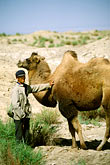 bactrian camel stock photography | China, Dunhuang, Camelherder with camel, image id 4-393-4