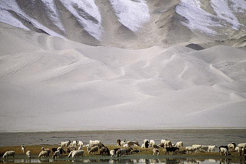 image 4-434-19 China, Pamirs, Sheep grazing by lakeside