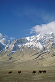 ice stock photography | China, Pamirs, Camels in high valley near Tashkurgan, image id 4-441-33