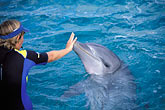 together stock photography | Cura�ao, Willemstad, Dolphin Academy, Cura�ao Sea Aquarium, image id 3-432-1