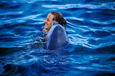 animal trick stock photography | Cura�ao, Willemstad, Dolphin Academy, Cura�ao Sea Aquarium, image id 3-432-15