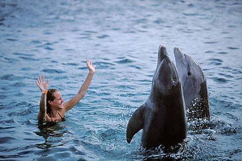image 3-432-18 Curacao, Willemstad, Dolphin Academy, Curacao Sea Aquarium