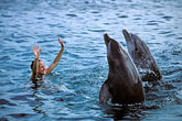 dolphin stock photography | Cura�ao, Willemstad, Dolphin Academy, Cura�ao Sea Aquarium, image id 3-432-19