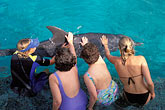 person stock photography | Cura�ao, Willemstad, Dolphin Academy, Cura�ao Sea Aquarium, image id 3-432-5