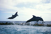 action stock photography | Cura�ao, Willemstad, Dolphin Academy, Cura�ao Sea Aquarium, image id 3-432-6
