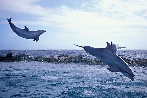 image 3-432-8 Curacao, Willemstad, Dolphin Academy, Curacao Sea Aquarium