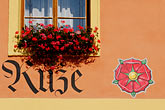 rose stock photography | Czech Republic, Rozmberk, WIndow with flowerbox, image id 4-960-7272