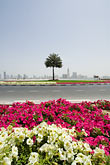 vertical stock photography | United Arab Emirates, Sharjah, Harbor and City Skyline, flowers in foreground, image id 8-730-290