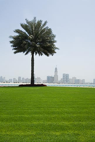 image 8-730-299 United Arab Emirates, Sharjah, Harbor and City Skyline, palm tree in foreground